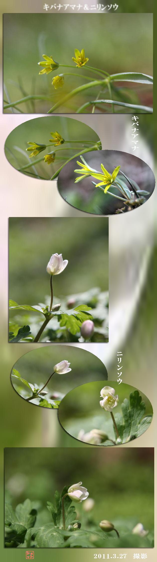 f0164592_1924797.jpg