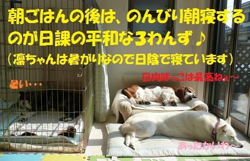 f0121712_224088.jpg