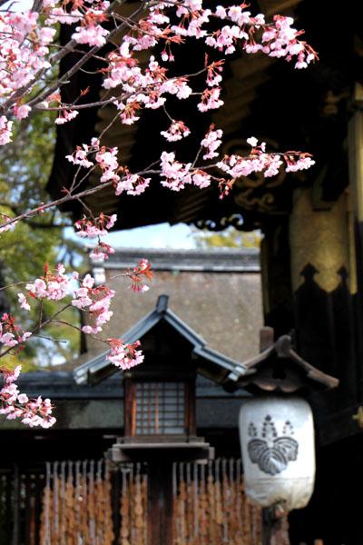 京の花だより 豊国神社と方広寺_e0048413_2073980.jpg