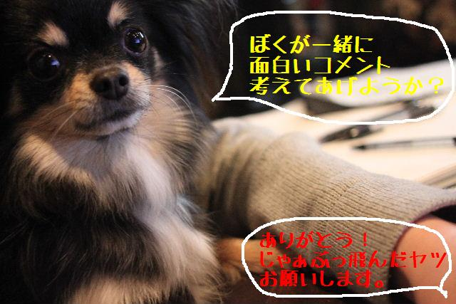 いい天気♪_b0130018_948236.jpg