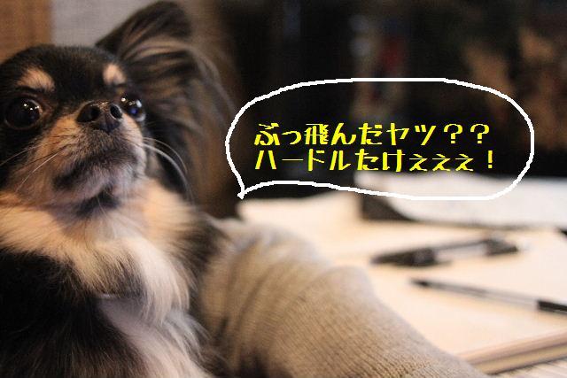 いい天気♪_b0130018_948658.jpg