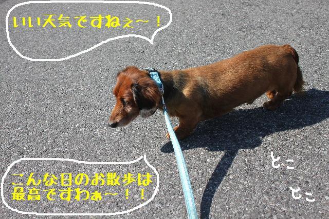 いい天気♪_b0130018_9501750.jpg