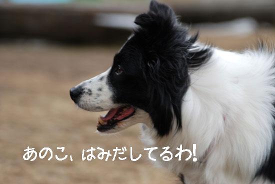 b0138824_16411399.jpg