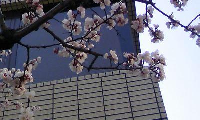 桜。_b0047333_17153231.jpg