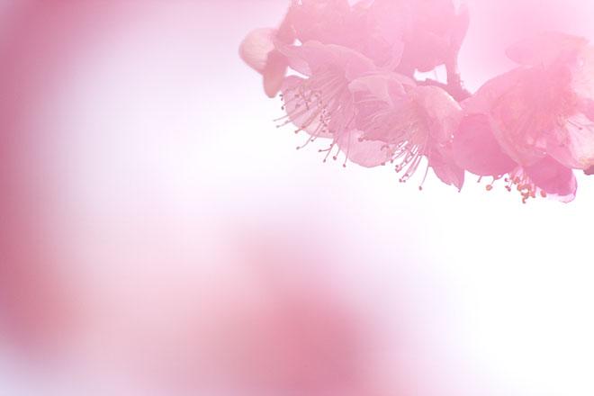 春の夢_c0067040_22562910.jpg