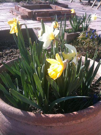 それでも春はやってくる_c0228650_1844755.jpg