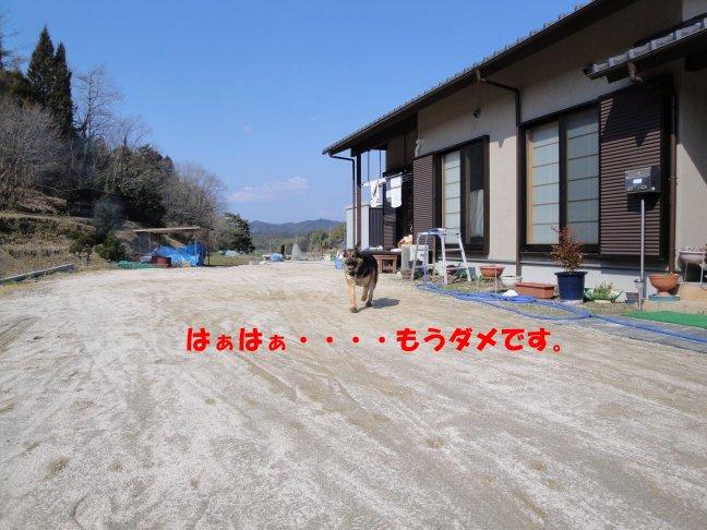 b0113663_911048.jpg