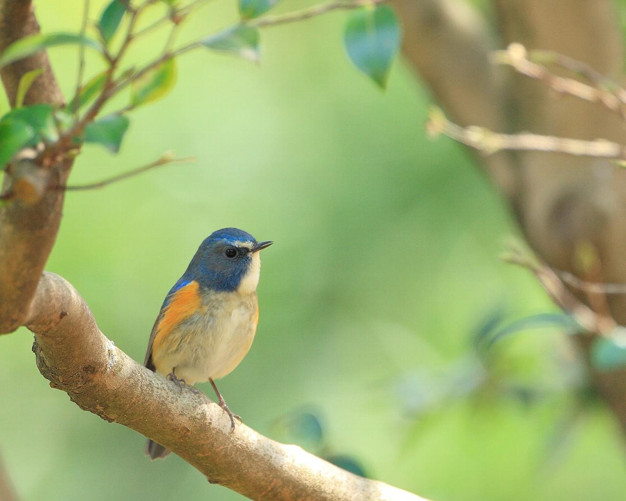 幸福の青い鳥 早期の復興と更なる飛躍への思いを込めて_f0105570_222411.jpg