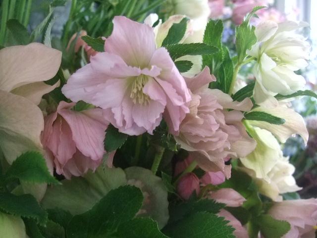 オークリーフ(桜の開花宣言)_f0049672_175416100.jpg
