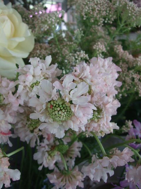 オークリーフ(桜の開花宣言)_f0049672_17542364.jpg
