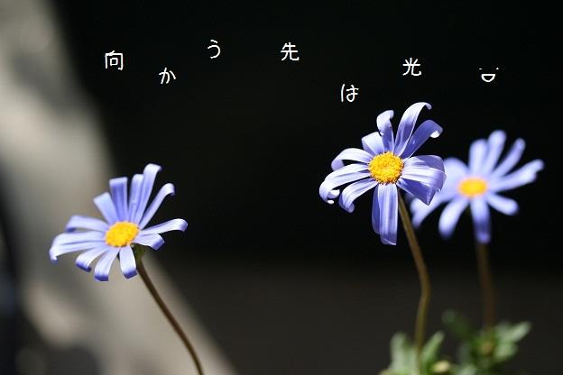 b0211674_22494952.jpg
