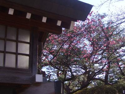 Pray for Japan   in開成山_e0120789_1617123.jpg