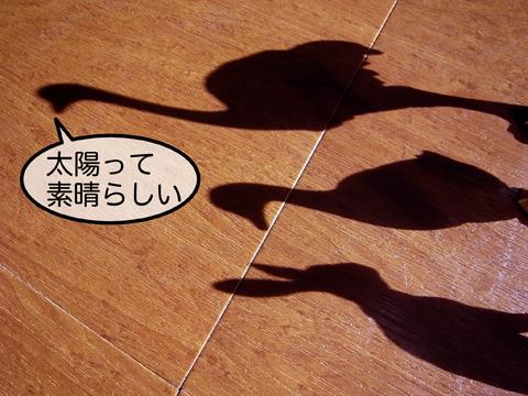 f0218891_940299.jpg