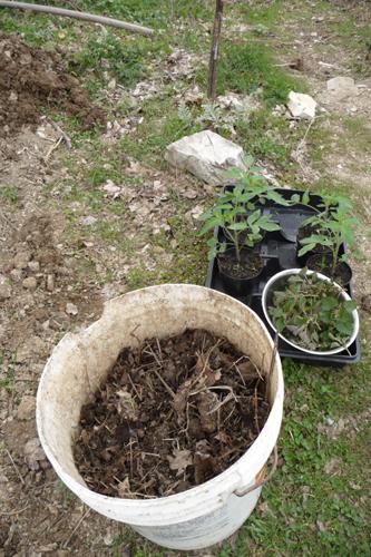 今年の早採り用トマト作戦~3月の畑_f0106597_551967.jpg