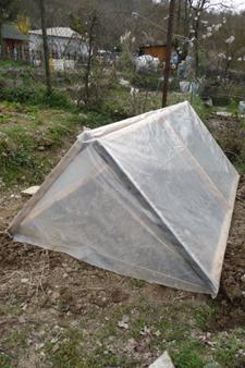 今年の早採り用トマト作戦~3月の畑_f0106597_59736.jpg