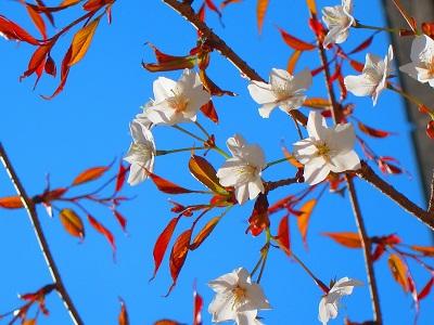 桜_d0169411_21362621.jpg