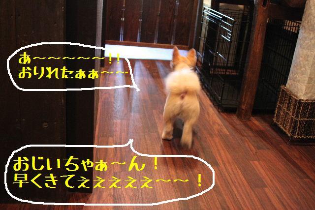 お知らせ!!_b0130018_10194016.jpg