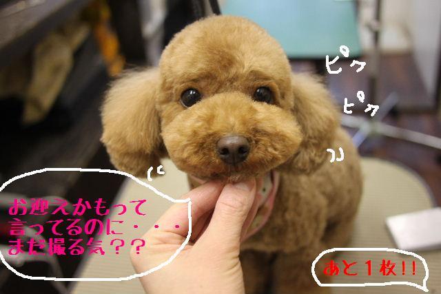 お知らせ!!_b0130018_10293288.jpg