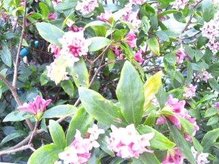 どんな時にも、花は咲く。_e0057018_4234250.jpg