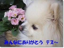 b0167519_915879.jpg