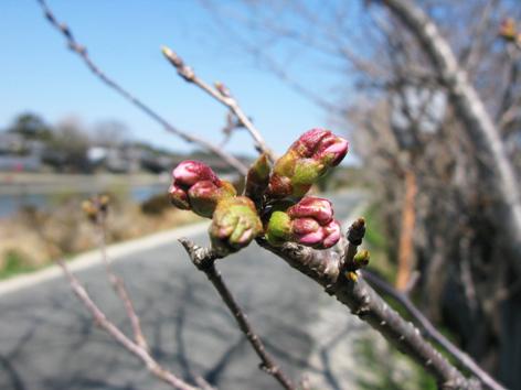 遅い春_f0129726_21594816.jpg