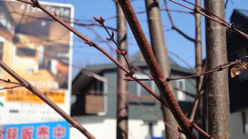 ここにも春が来ています_c0178231_165694.jpg