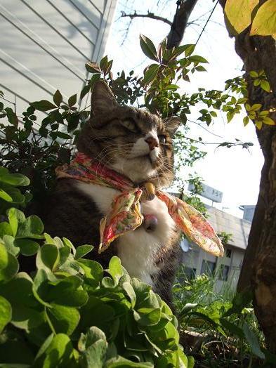 野生の猿が庭に来た!_b0089338_21413536.jpg