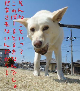 f0195543_23341517.jpg