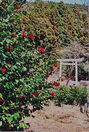 大馬神社の貴婦人_e0156251_011179.jpg
