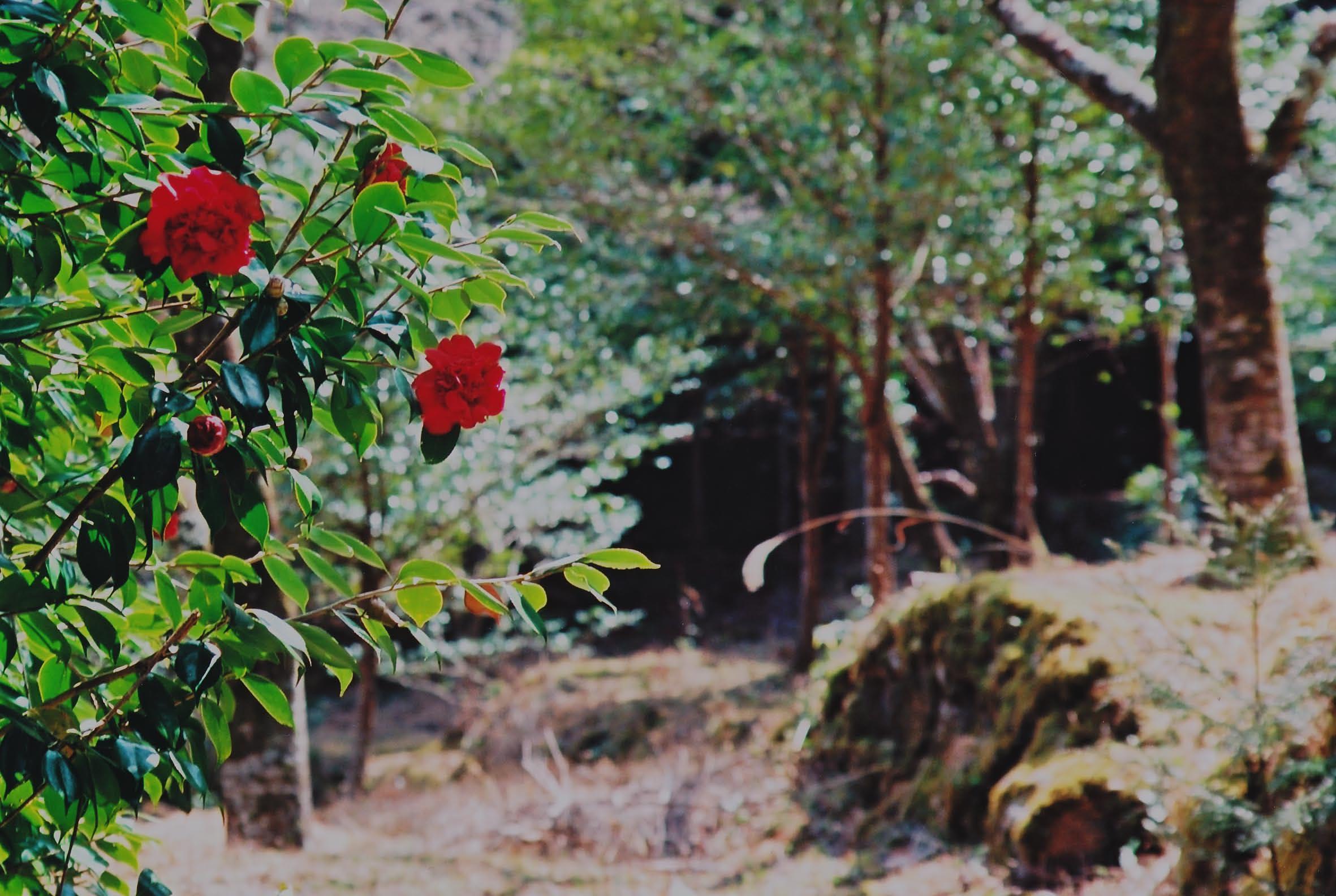 大馬神社の貴婦人_e0156251_0123199.jpg