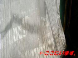 a0052654_22332574.jpg
