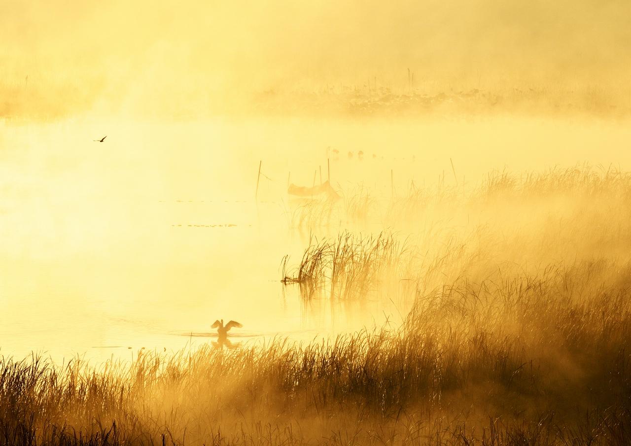 霧の朝 3_f0018464_712247.jpg