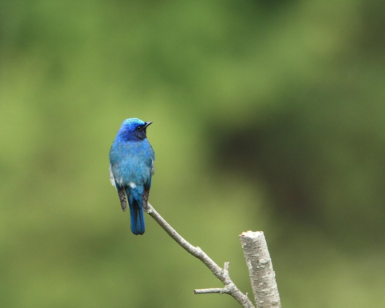 幸福の青い鳥その2_f0105570_222431.jpg