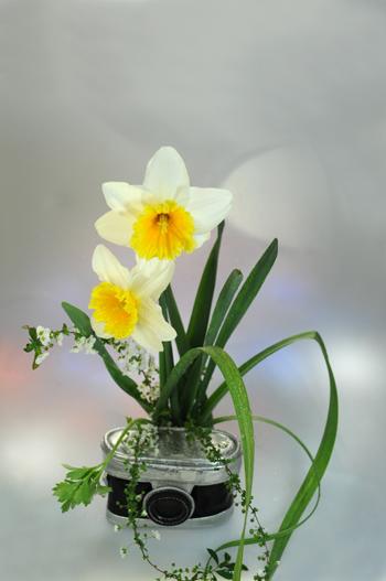生け花。_b0133890_1221273.jpg