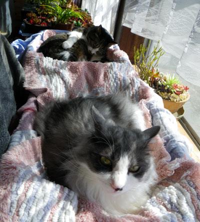 猫部屋でグルーミング♪_a0136293_17393980.jpg