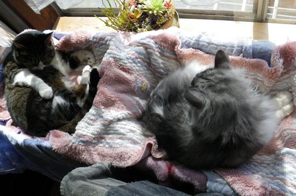 猫部屋でグルーミング♪_a0136293_17402881.jpg