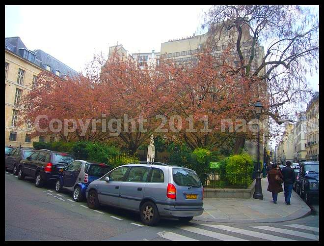 【サクラ情報】3月27日RUE DE SEINE PARIS(パリ)_a0008105_2012141.jpg