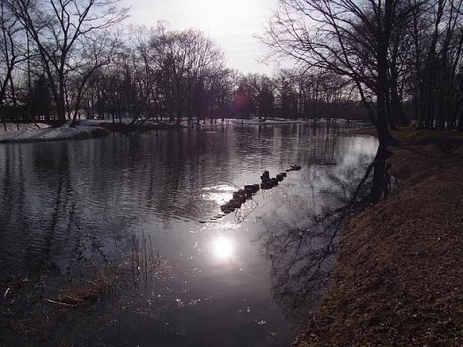 2011年3月30日(水):今日も春っぽく_e0062415_17281791.jpg