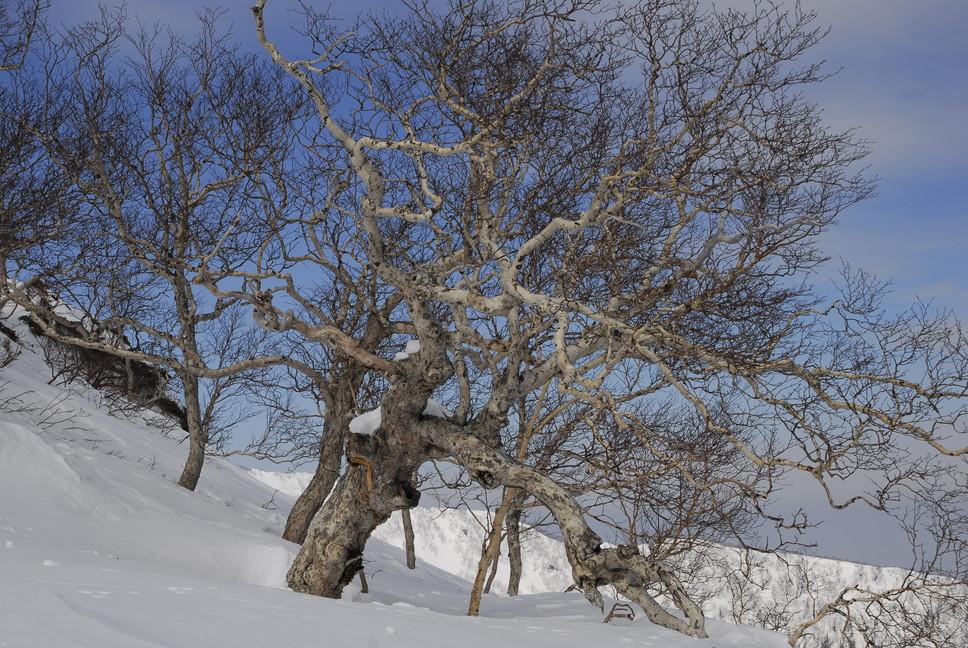 2011年3月 春、深雪の大雪山に抱かれる_c0219616_1875559.jpg