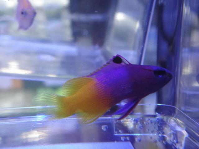 海水魚・サンゴ・水草・淡水魚_f0189122_12592525.jpg