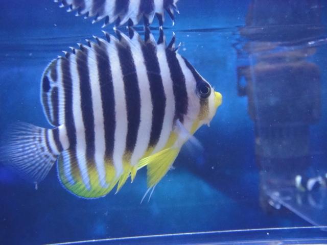 海水魚・サンゴ・水草・淡水魚_f0189122_130175.jpg