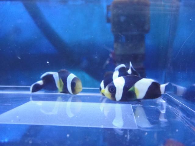 海水魚・サンゴ・水草・淡水魚_f0189122_1305889.jpg