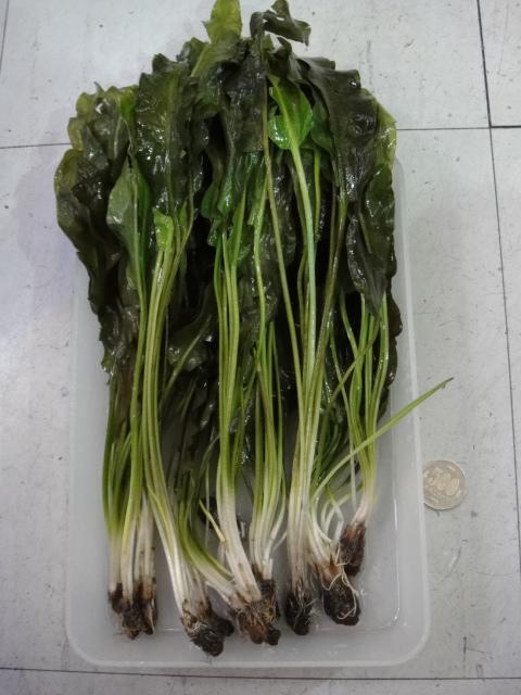 海水魚・サンゴ・水草・淡水魚_f0189122_13142315.jpg