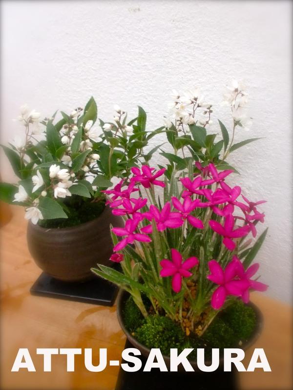 こんな時こそお花を・・・_a0197730_14212214.jpg
