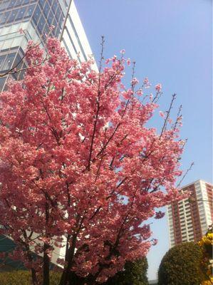 春ですね☆_b0161661_14271025.jpg