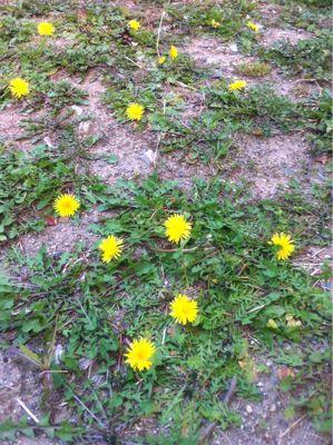 春ですね☆_b0161661_14271417.jpg