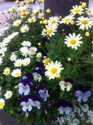 春ですね☆_b0161661_14271562.jpg