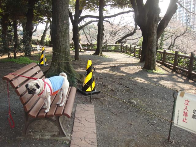 メタボ解消お散歩・・・桜の花が咲いてたよ♪_b0190666_17582274.jpg