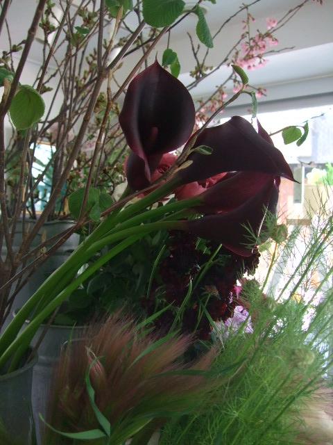 オークリーフ(白木蓮と黒いカラーの花)_f0049672_1433248.jpg