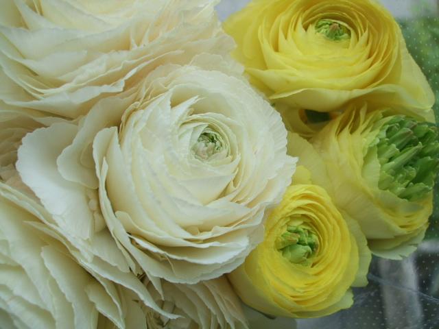 オークリーフ(白木蓮と黒いカラーの花)_f0049672_14425920.jpg